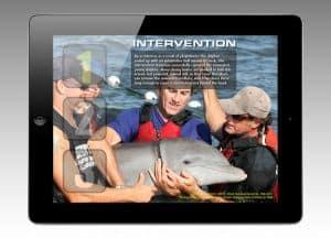 Wild Dolphins Appreciative Inquiry