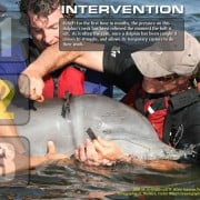 Dolphin Intervention