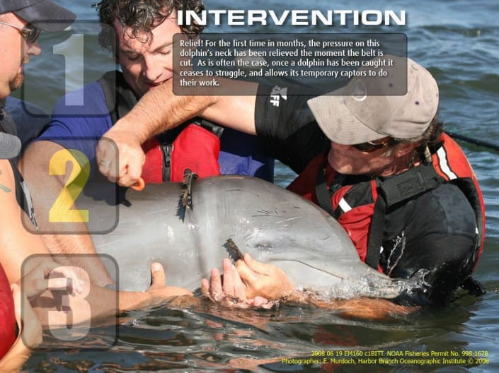 Dolphin Intervention