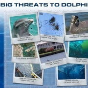 The biggest threat to dolphins is man.