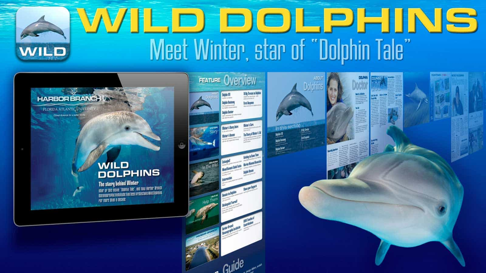 Dolphin Tale Winter The Dolphin iPad Background